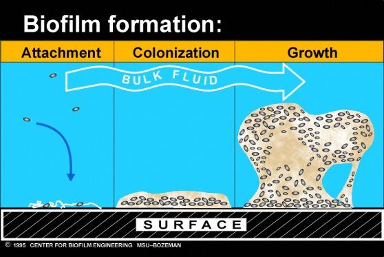 biofilmtutorial